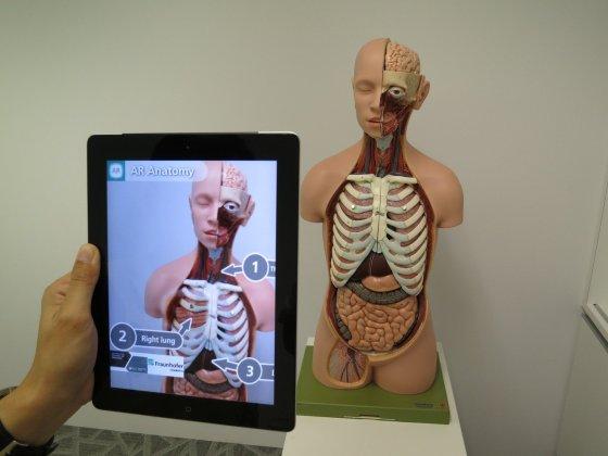 Una tableta con realidad aumentada sobre un modelo de aparato respiratorio humano